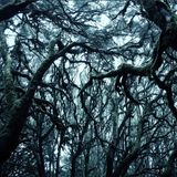 March 2014 Mix: The Dark Psy of the Trees
