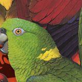 Birds Of A Feather Mixtape