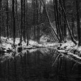 Family Forest (Original Mix)