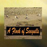 Best of A Flock of Seagulls