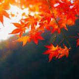 Autumn Leaves Oct 2019
