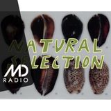 Natural Selection with Sticky Dub (July '19)