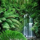 Rainforest Natural Sounds