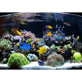Saltwater Lecture Hour: Troubleshooting & Maintaining a Saltwater Aquarium