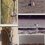 The Wind-Up Bird Chronicle (2013)