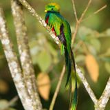 DjRa Quetzal Niza 1982-83