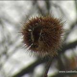 FlyInEye - Blue Chestnut minimal-techno mix