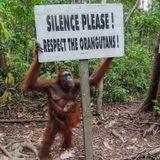 Silence Please - Ocelot