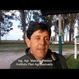 Ing. Agr. Marcelo Pereira-Coordinador Regional Litoral Norte