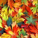 Quietmusic - October 1 (Hour 3 excerpt)