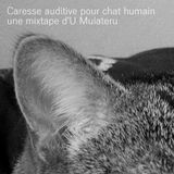 Caresse auditive pour chat humain