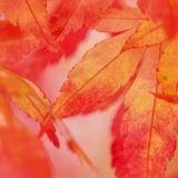 Celebrate Change  - Autumn Ecstatic journey