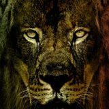 Reggae of de lion