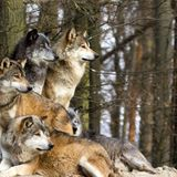 Brother Albert & LeMeK - The Wolf Pack ( mix for Bassrequest 27.sep.2014 )