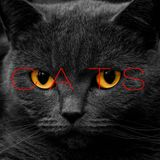 Cats Mixed by: Luis Pacheco