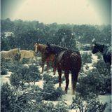 "Skinny Wolves - ""Winter Worm, Summer Grass"" Winter 2013 Mix"