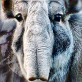 skirmish004 | 'endangered breed'