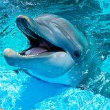 Frühstück 19.04.17 La chronique de la protection des animaux : Les dauphins !