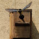 Phantom Circuit #176: Vogelhausmusik