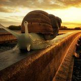 Snail On A Rail - A-Horn