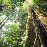 URBAN FORESt #miXtape 040 - WiLD