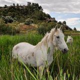 En perill la gestió de la Reserva Natural de Sebes i el Grup de Natura Freixe