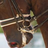 Horse welfare questioned in Olympic equestrian events