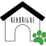 Podcast - Reabrigue