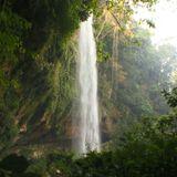 Tamper Jungle Mix 010518 Old/New/Originals