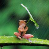 Hiding for the rain