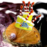 Clam Radio half baked smorgasbord of songs from the 50's and the oughts!