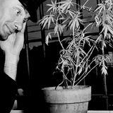 Canciones de Marihuana