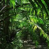 Iconix - Tenebrous Jungle