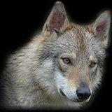 Mario Wolf