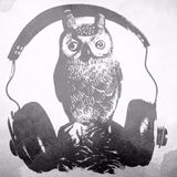 Tracy The Owl