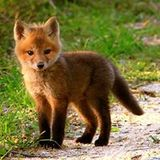 Fur Friction