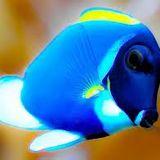 bluetang