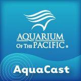 Aquarium of the Pacific AquaCa