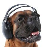 DJ Rhett Roe