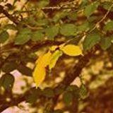Aubina Sardina Mandarina