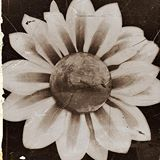 Mars_Flowers