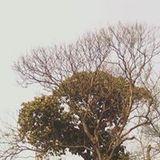 Oindree Priyadarshini Mukherje