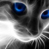 Miausae