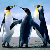 W&W--Lift off VS Armin Van Buren & W&W--D# Fat VS 7 Skies vs Nitrous Oxide--Right on