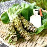 hyt-wasabi