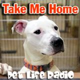 Take Me Home - Episode 115 Ollie - A Sweet Heinz 57 Dog