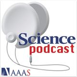 Science Podcast - Fruit fly sex chromosomes, climate change in action, advice for young scientists,