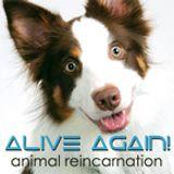 Alive Again - Pet Reincarnatio