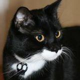 Tito Tha Cat