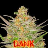 THC Dank Reggae Vol-24